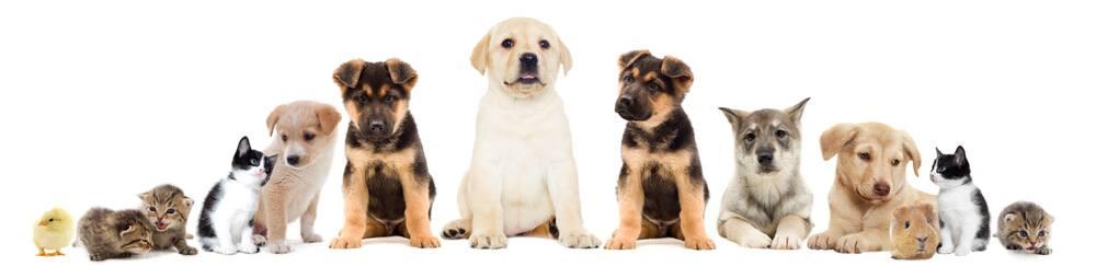 Populairste huisdieren in Nederland